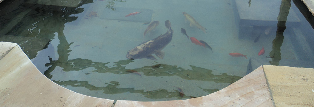 During garden work fish in pond